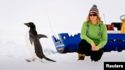 Cô Barbara Tucker, một thành viên trên tàu MV Akademik Shokalski bị kẹt trong vùng băng giá hẻo lánh ở Nam Cực ngồi nhìn một con chim cánh cụt đi ngang qua.