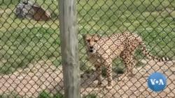 Virginia Animal Park Open Amid Coronavirus Restrictions