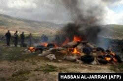 Bekaa Vadisi'nde Lübnanlı yetkililer tarafından imha edilen kaçak hintkeneviri (Arşiv)