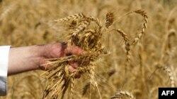 Україна скасувала мито на експорт зернових
