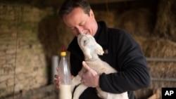 Thủ tướng Anh và cũng là người đứng đầu đảng Bảo thủ tới thăm một trang trại trong cuộc vận động bầu cử.