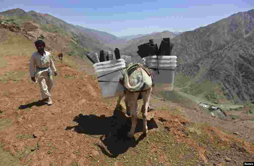 A man loads ballot boxes and other election material onto a donkey to be transported to polling stations not accessible by road, in Shutul, Panjshir province, June 13, 2014.