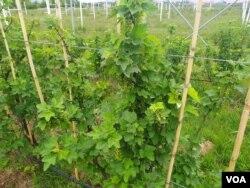 Poljoprivredno dobro Butmir