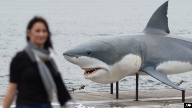 A 7.4 meter great white shark replica floats into Sydney Harbor, Nov. 26, 2013.