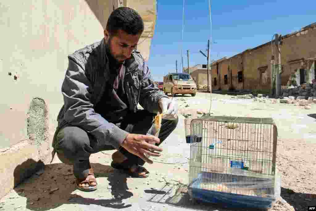 Wani mutum ya na daukan samfurin mataccen tsuntsu da ake tunanin iskar gas ce ta kashe shi a Idlib a Syria.