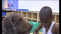 Anjing Bantu Anak Belajar Membaca - Liputan Feature VOA