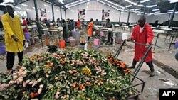 Radnici bacaju ruže koje neće moći da transportuju sa farme u Naivaši, u Keniji
