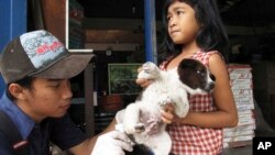 In this 2010 file photo, a veterinarian at the nonprofit Bali Animal Welfare Association gives a rabies shot to a puppy in Kebon Kaja village, Bangli Regency in Bali, Indonesia. (AP Photo/Margie Mason)