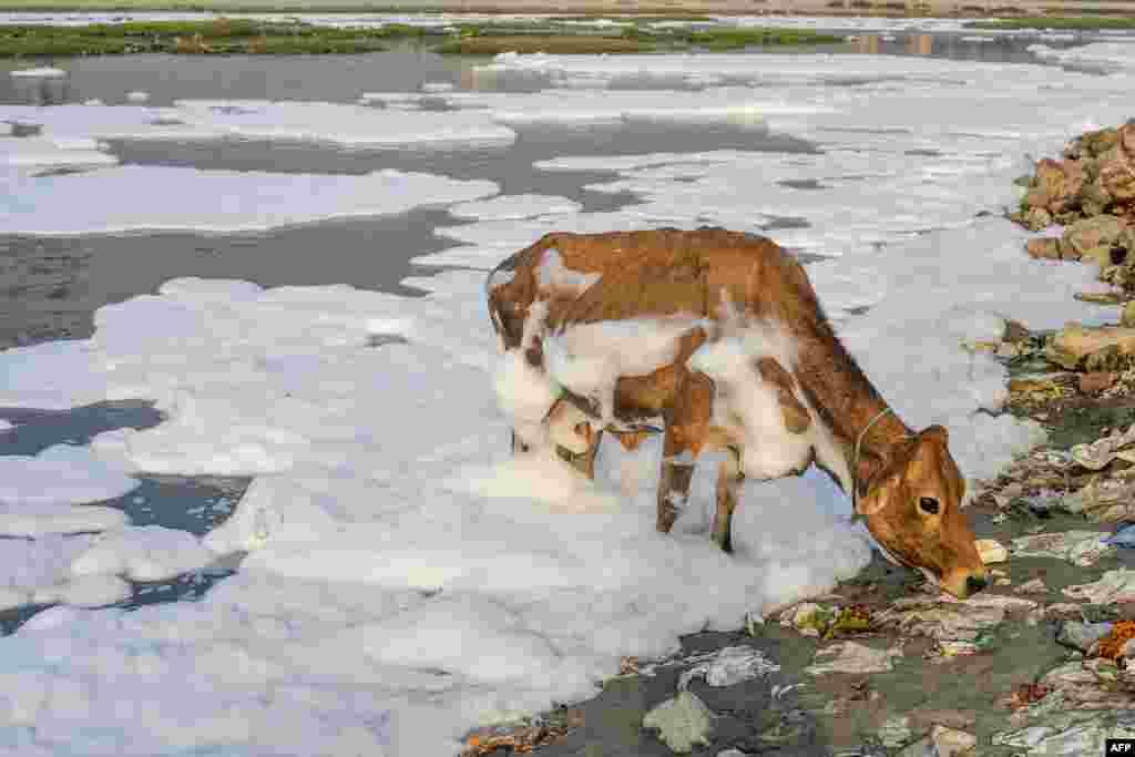 Hindistan, Dehli şəhərində Yamuna çayının sahilində atılmış tullantılar.