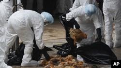2011年12月21号,香港健康工作人员在一个批发市场宰杀鸡。