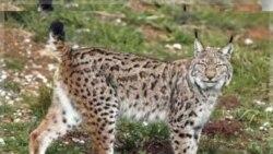 منطقه حفاظت شده دنا: خطر از همه سو- (بخش ۲)
