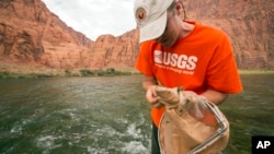 In this July 10, 2013 photo, U.S. Geological Survey scientist Ted Kennedy takes aquatic samples in the Colorado River below Glen Canyon Dam in northern Arizona. (David Herasimtschuk/ Freshwaters Illustrated/USGS via AP)