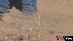 美國西部乾旱持續 引發農人擔憂