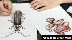 Paintings by Rosalie Haizlett, a resident artist in the Great Smokey Mountains National Park.
