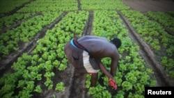 Un fermier en Côte d'Ivoire, l'un des pays qui recevront l'aide européenne (Reuters/Thierry Gouegnon)