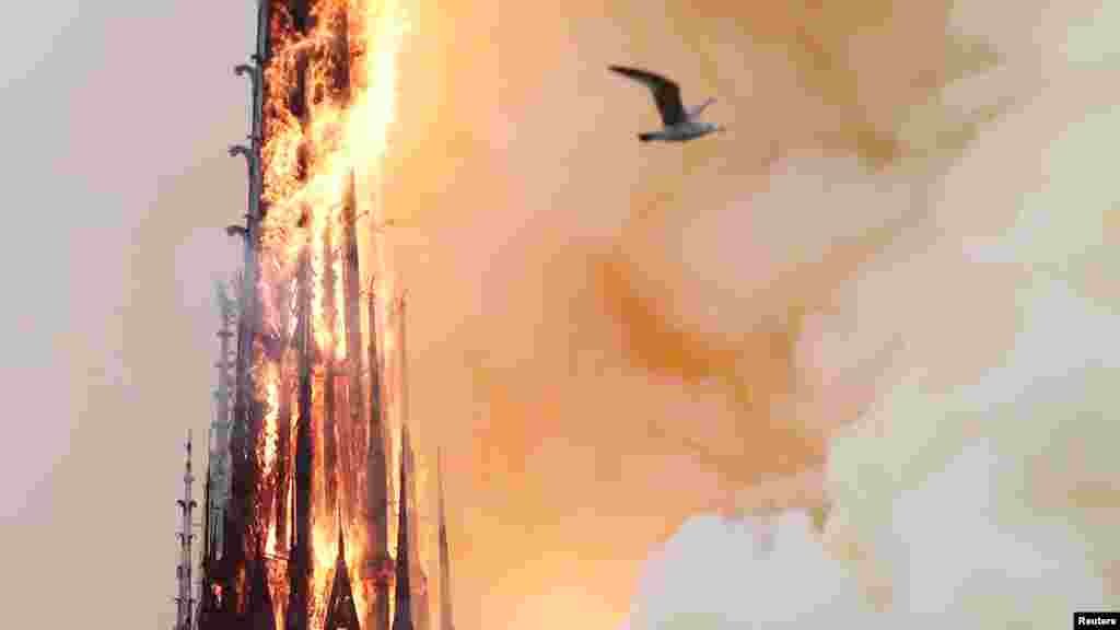 د نوتردام د کلیسا د ودانۍ د جوړیدلو چارې په ۱۱۶۳ میلادي کال کې شروع شوې وې.