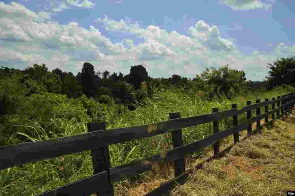 «Сельский» забор вокруг выставки