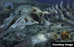 Artist recreation of ocean-bottom ecosystem that grows on whale falls. (Credit: Michael Rothman)