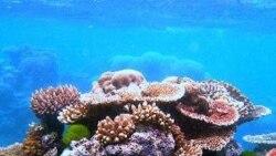 کارشناس: بی رنگ شدن صدف ها در سواحل اندونزی احتمالاً به دليل افزايش دمای آب است