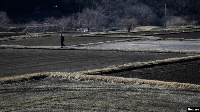 A man walks between fallow rice fields in Miyakoji in Tamura, Fukushima prefecture, April 1, 2014.
