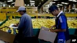 Estados Unidos permitirá el ingreso de limones argentinos a partir del 26 de mayo de 2017.