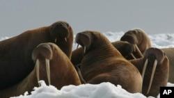 Глобальное потепление угрожает существованию многих животных и растений