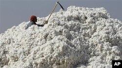 Công nhân Ấn Độ làm việc tại nhà máy bông sợi ở Dhrangadhra, khoảng 110km từ Ahmadabad, Ấn Độ.