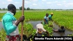 Activités agricoles dans le village lacustre de Sô Ava, Bénin, 14 juillet 2017. (VOA/ Ginette Fleure Adandé)