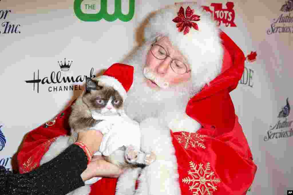 Grumpy Cat arrives at the 84th Annual Hollywood Christmas Parade in Los Angeles, California, Nov. 29, 2015.