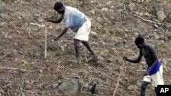 FILE - Ethiopian farmers plant seeds in Konso. A drought has created food and water shortages in the country.
