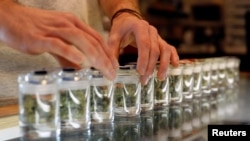 FILE - A variety of medicinal marijuanas in jars at Los Angeles Patients & Caregivers Group dispensary in West Hollywood, Calif., Oct. 18, 2016.