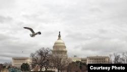 Capitol Hill building in Washington, D.C. (Photo: Diaa Bekheet/VOA)