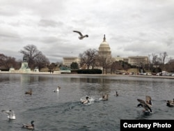 美国之音总部附近的美国国会大厦和大水池 (Diaa Bekheet/VOA)