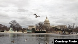 FILE - Capitol building in Washington, D.C. (Diaa Bekheet/VOA)