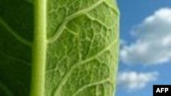Gjethja artificiale transformon dritën e diellit në energji elektrike