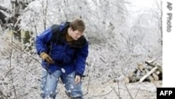 Giữ ấm cho cây khi trời quá lạnh