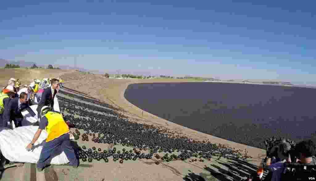 两万遮阳球汇入水库激起水花(美国之音国符拍摄)