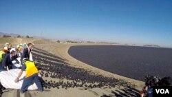 兩萬遮陽球匯入水庫激起水花(美國之音國符拍攝)