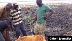 Drought in Matabeleland