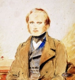 A painting of young Charles Darwin
