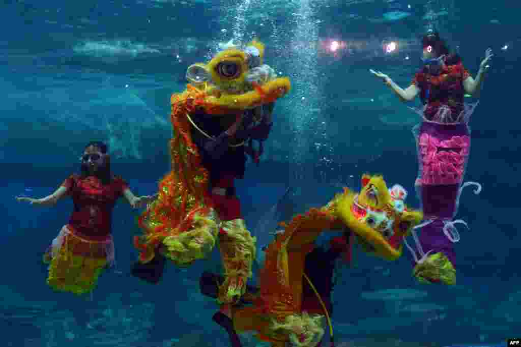 Indonesian performers dressed as mermaids wearing traditional Chinese cheongsam dress and a lion perform underwater in a special program celebrating the Lunar New Year at Jakarta's Ancol park, Indonesia.