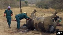 Badak yang tewas dibunuh oleh pemburu di Taman Nasional Kruger di provinsi Mpumalanga, Afrika Selatan. (Foto: Dok)
