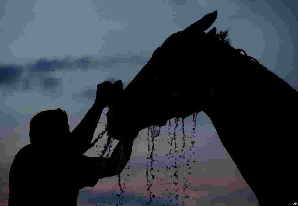 حمام صبحگاهی اسب پیش از تمرین آماده سازی برای شرکت در یکصد و چهل و چهارمین مسابقات اسب سواری در ایالت کنتاکی