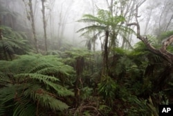 Cloudforest at around 1,600 meters on the Massif de la Hotte, Haiti, is home to many critically endangered amphibians and one of the highest priority sites for conservation worldwide.