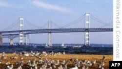 Phục hồi môi trường sống vùng ven Vịnh Chesapeake