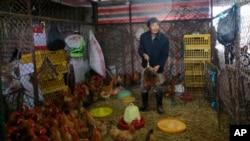 一名工人在上海禽类批发市场上从笼内抓出一只鸡(4月5日资料照片)