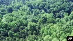 Governments See Dollars in Re-Grown Forests
