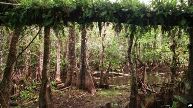 Jutaan wisatawan mengunjungi Taman Nasional Everglades ini kalau mereka berlibur ke Florida (foto: dok).
