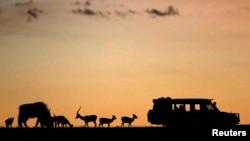 Des animaux sont près des touristes lors d'un coucher de soleil dans le parc naturel de Masai Mara, le 7 octobre 2014.
