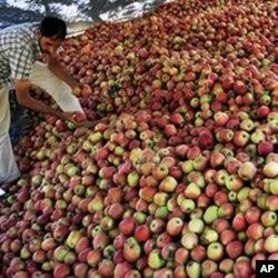 بھارتی کشمیر میں سیبوں کا ایک تاجر